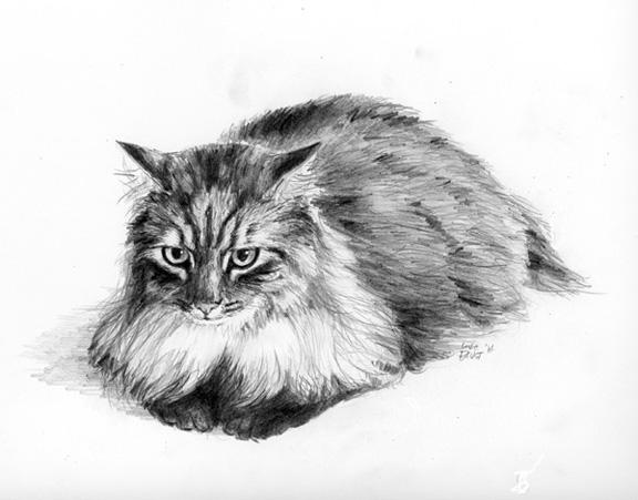 pencil drawing cat
