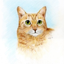 colored pencil cat portrait orange