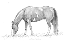 pencil drawing horse