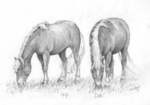 pencil portait horses