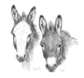 pencil portrait donkeys therapy