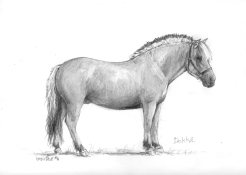 pencil portrait therapy horse