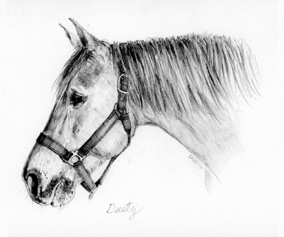 pencil portrait horse